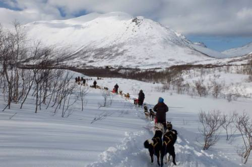 dogsled3